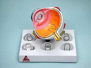 IOL Eye Model-0